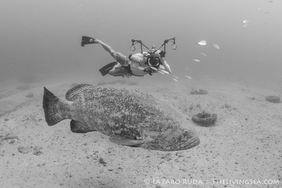 Michael Patrick O'Neill with goliath grouper