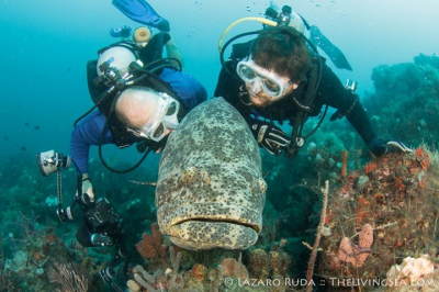 We love our Goliath Groupers