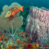 Sea fan and Barrel Sponge