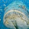 Best Goliath Grouper Diving