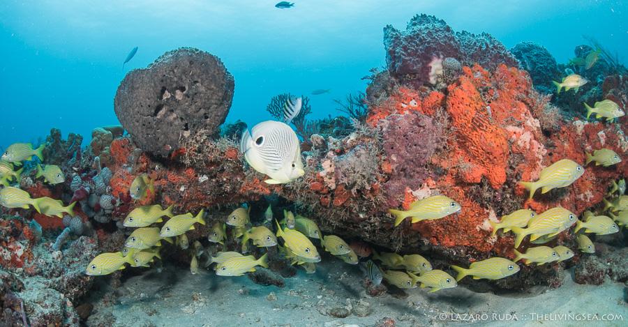 Best scuba diving in Florida