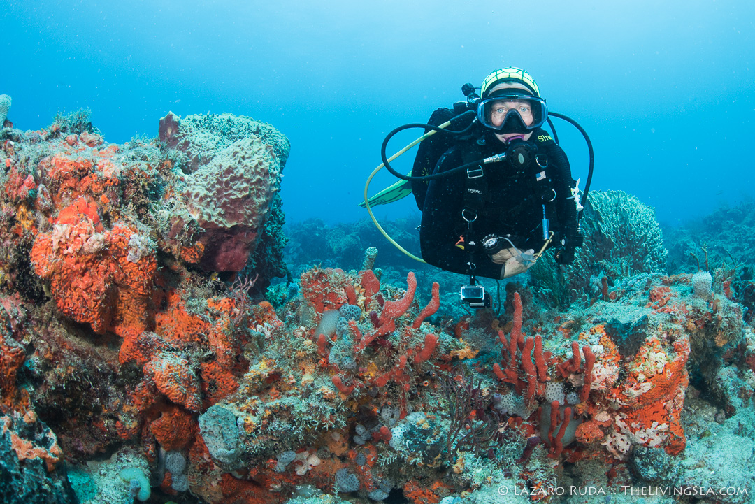 Excuses to go scuba diving - help a friend who is very down