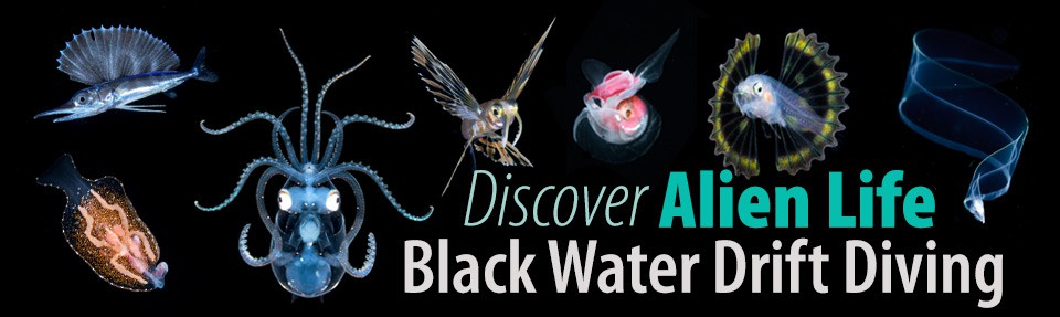 Black Water Drift Diving