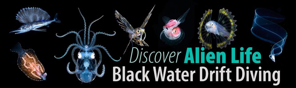 Black Water Drift Diving