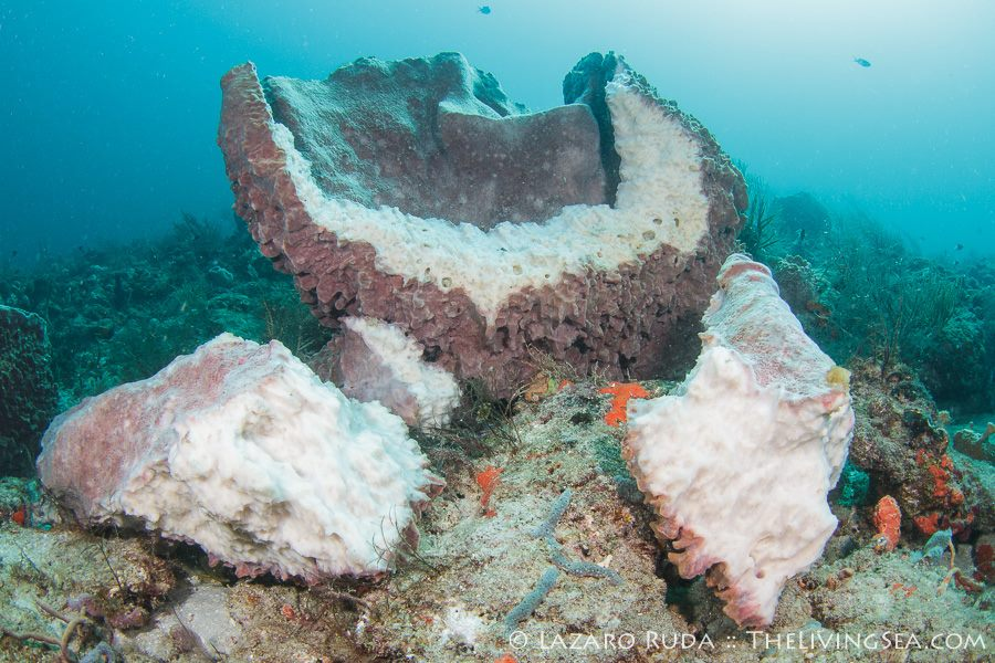 shipwreck in the story of our tragic end at the palm beach Historic shipwreck salvage operation says it recovered more than $1 million in gold artifacts from the 1715 treasure fleet  located approximately 30 miles north of west palm beach they say.