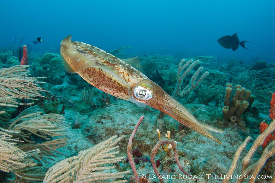 Palm Beach Scuba Diving Is Full Of Surprises
