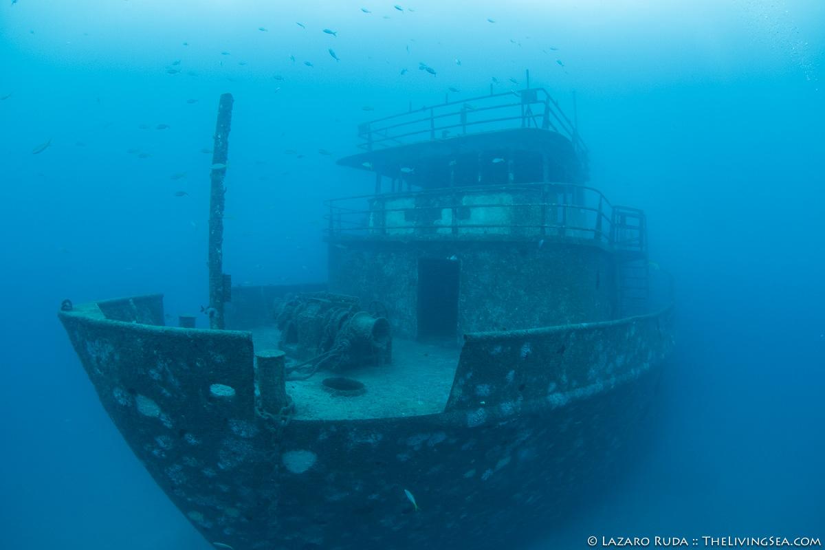 Captains dive blog archives walkers dive charters wrecks reefs of palm beach xflitez Images