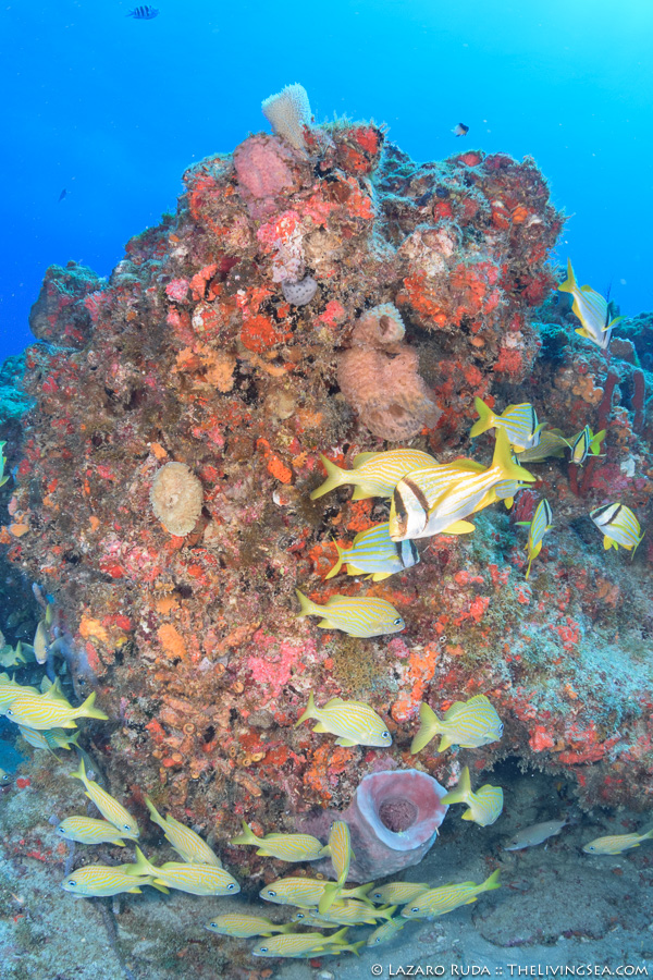 A Week Of Diving In Palm Beach