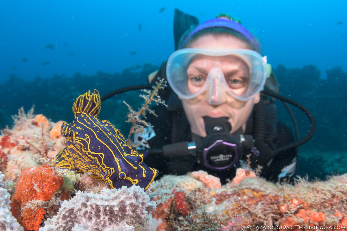 A week of diving in palm beach allison and nudibranch xflitez Images