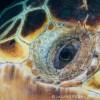Vision of a Loggerhead sea turtle (Caretta caretta)